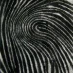 Whorled, 1/3, mezzotint, Disquietude, 2010; Gallery of Visual Arts, University of Montana