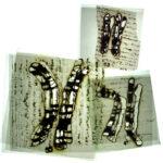 Detail, 46 – vellum, thread, plexi-glas, Disquietude, 2010; Gallery of Visual Arts, University of Montana